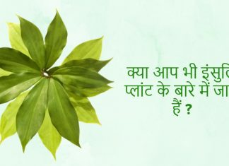 insulin plant for diabetes in hindi