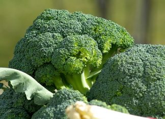 diabetes diet broccoli superfood health benefits
